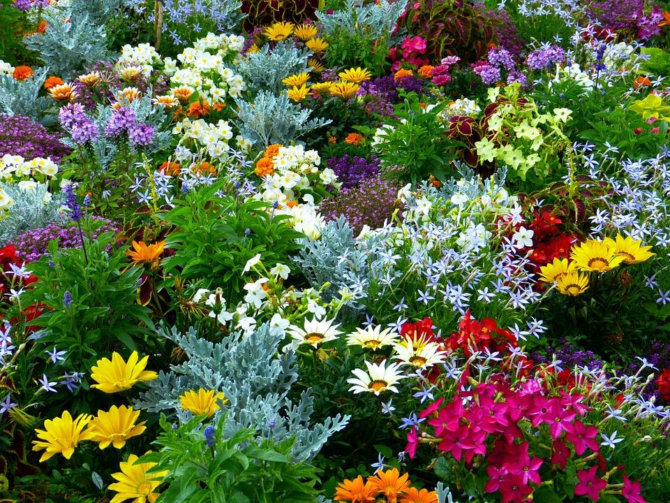 Section Jardinage
